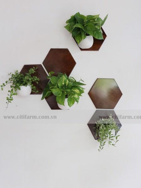 Hoa gỗ lục giác ốp tường thanh lọc không khí - 6