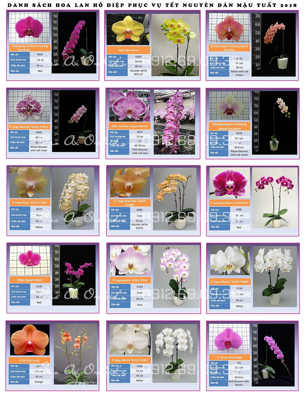 bang gia hoa lan ho diep si tet 2018