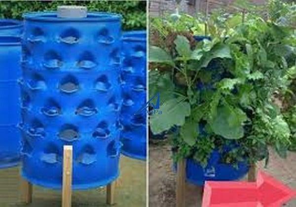 hướng dẫn trồng tháp rau