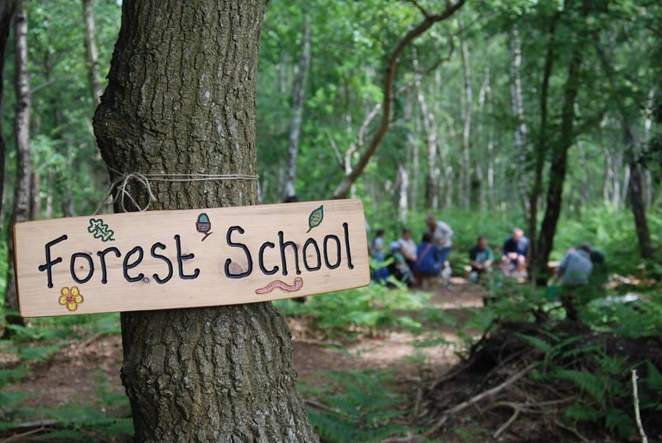 Tìm hiểu về Forest School