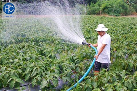 Tỉnh Long An hướng đến sản xuất rau sạch quy mô lớn