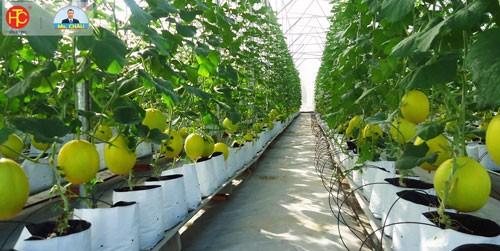 Cơ hội & thử thách đối với nền nông nghiệp nước ta trong 5 năm tới