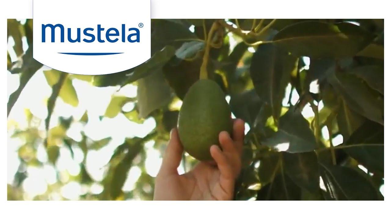 Avocado Perseose®, thành phần bảo vệ làn da bé tuyệt vời