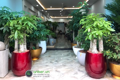 Showroom Anber 2018