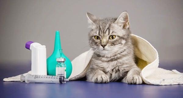 bệnh hen suyễn ở mèo