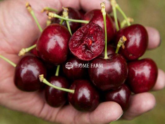 Những lợi ích không ngờ của trái Cherry