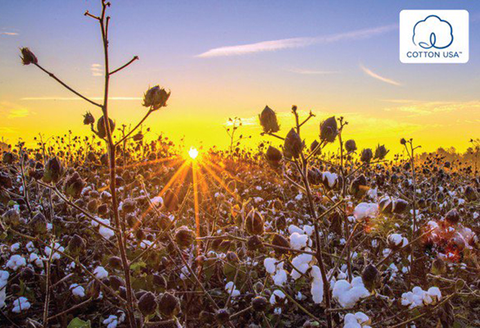 Sunfly ứng dụng cotton USA cho thời trang mặc nhà