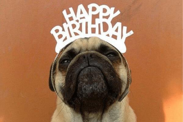 99+ hình ảnh chúc mừng sinh nhật cực kỳ hài hước vui nhộn cho bạn