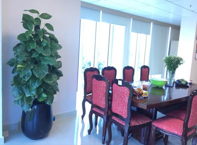 Anber cho thuê chậu cây cao cấp kiêm bảo hành cây