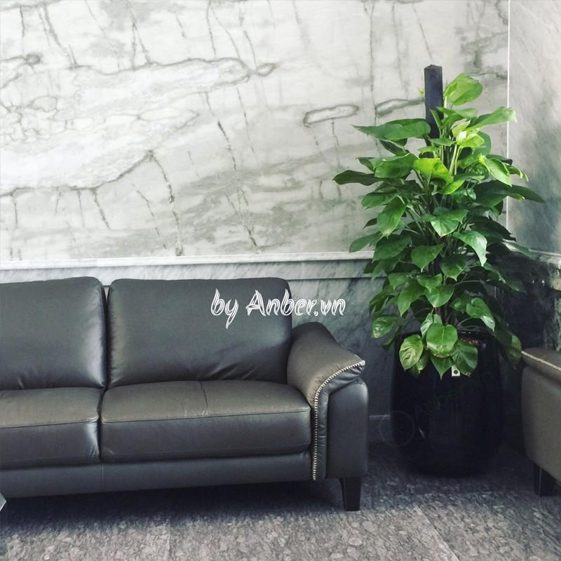 Anber cho thuê chậu cây cảnh trang trí khách sạn