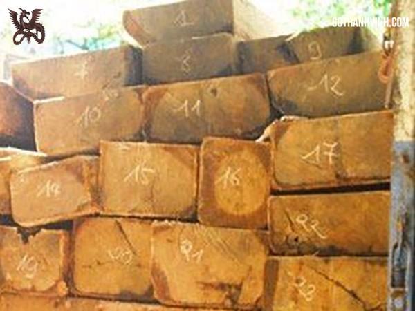 gỗ trắc vàng