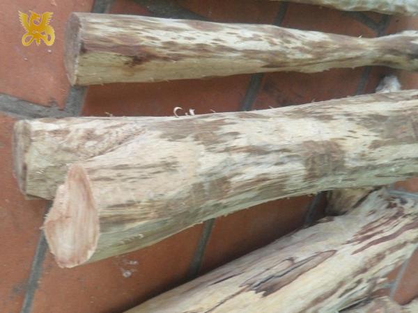 nhận biết gỗ sưa