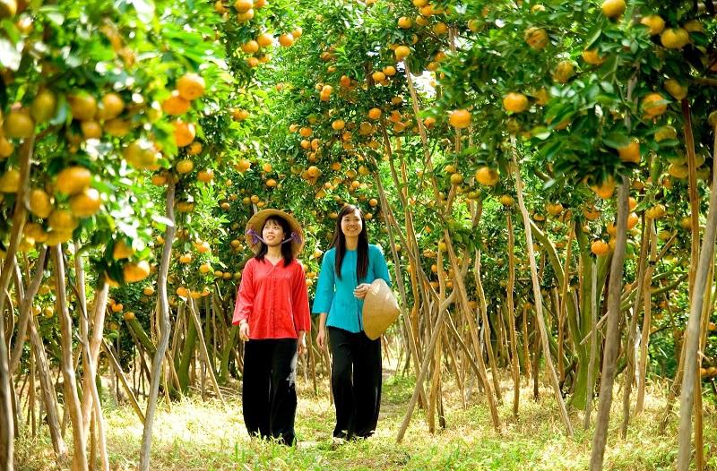 Miệt vườn trái cây ở Cần Thơ