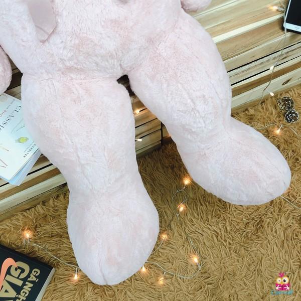 Gấu ngực 3 tim