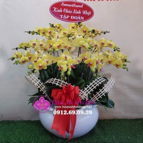 gia hoa lan ho diep tet 2020