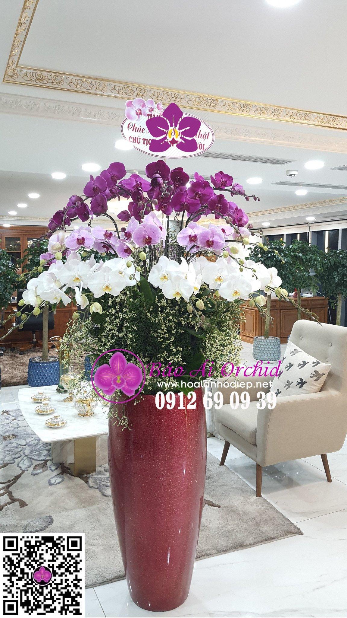 chau hoa lan bieu tet