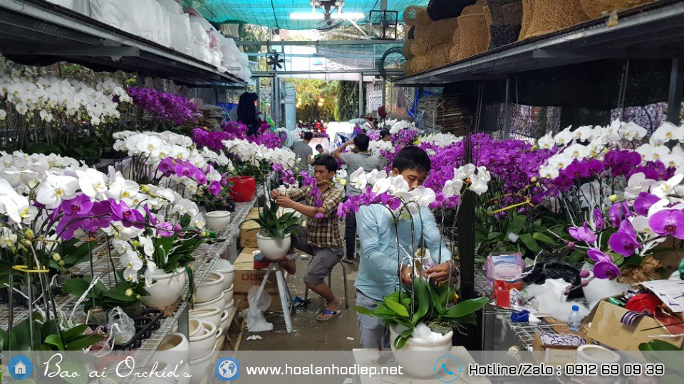 shop lan ho diep ha noi
