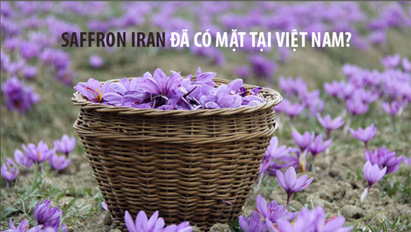 https://www.anpa.com.vn/blogs/2019/vai-thong-tin-ve-giong-cay-nghe-quy-saffron