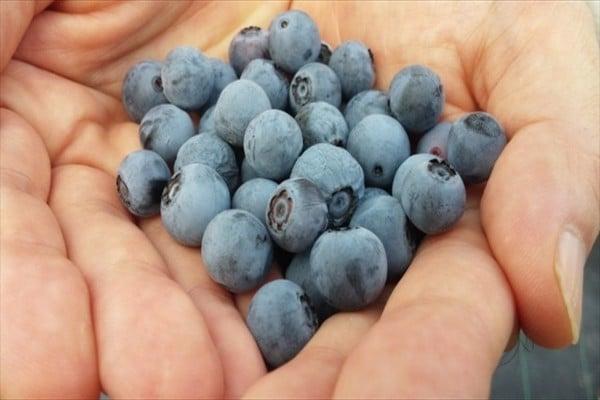 Viên uống bổ mắt Fancl Blueberry Nhật Bản