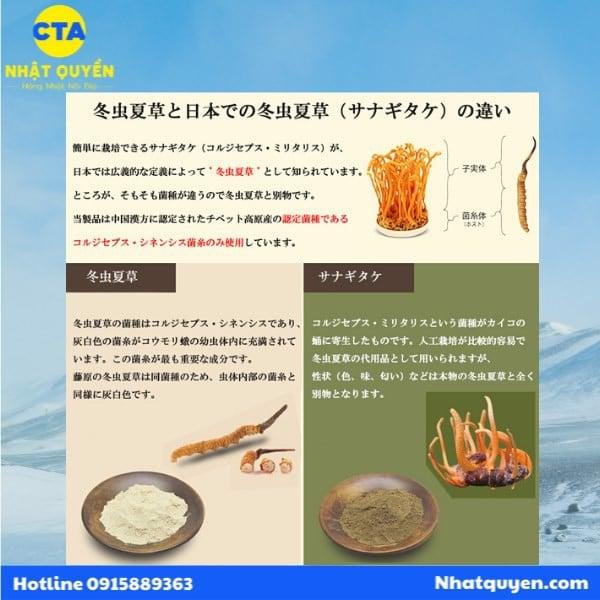 Đông trùng hạ thảo Nhật Bản Fujiwara