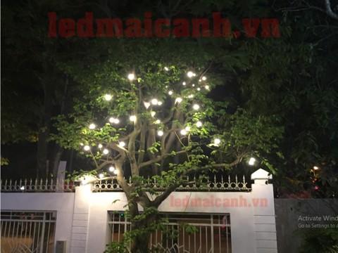 bóng đèn treo thả cây to ngoài trời