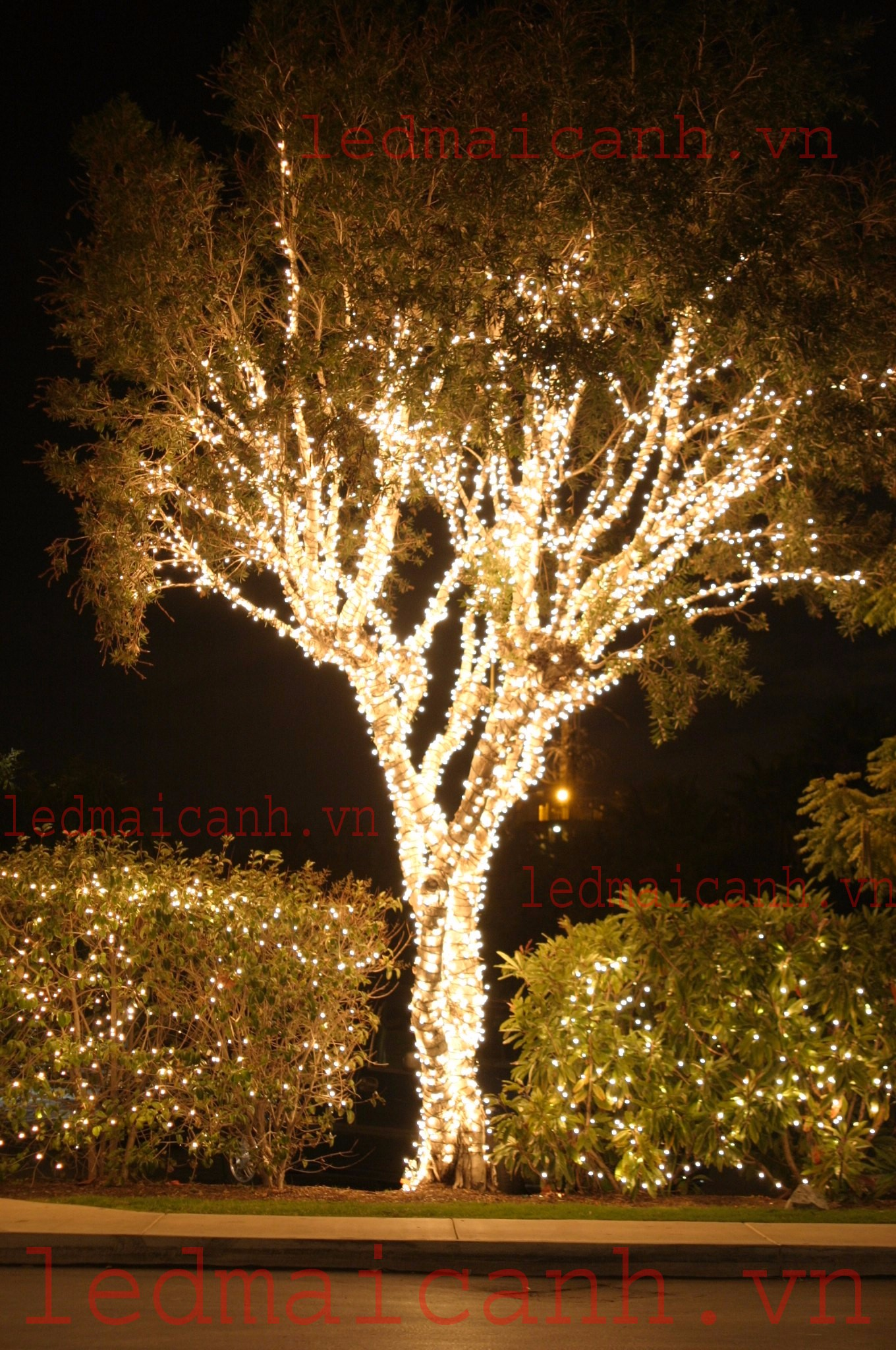 đèn trang trí cây đẹp