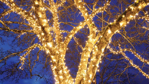 dây đèn quấn cây đẹp giá rẻ