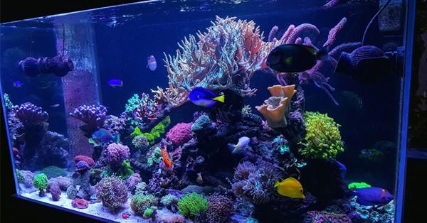 bể cá nước mặn rạn san hô