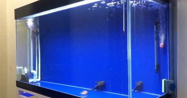 bể cá rồng mới