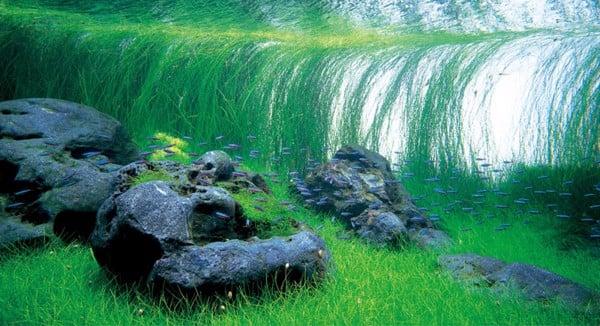 cá cảnh bể thủy sinh