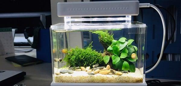 hệ thống lọc nước bể cá