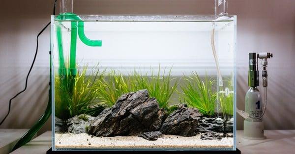máy lọc nước bể cá là gì