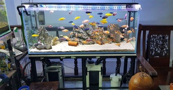 mua máy lọc nước bể cá giá rẻ