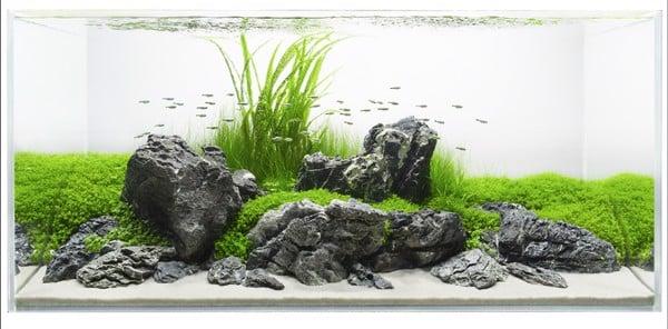 nghệ thuật sắp xếp bể cá thủy sinh đẹp
