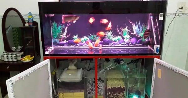 nguyên nhân bể cá rồng bị đục nước