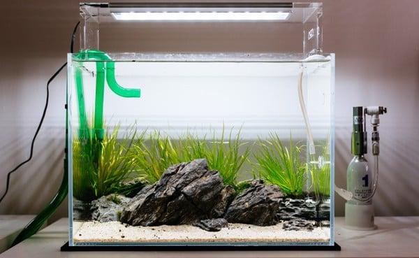 sự quan trọng máy sục khí bể thủy sinh