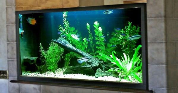 tầm quan trọng của máy bơm nước bể cá