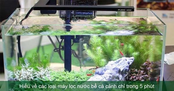 Tổng quan về các loại máy lọc nước bể cá cảnh