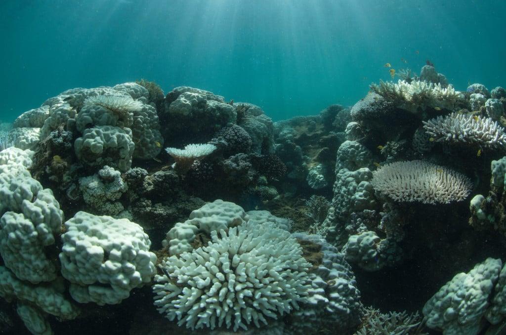 Kem chống nắng đã hủy hoại các rạn san hô như thế nào?