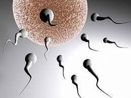xuất tinh sớm có ảnh hưởng đến chất lượng tinh trùng không