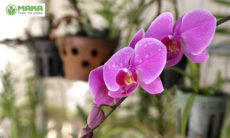 Hướng dẫn cách trồng và chăm sóc hoa lan hiệu quả