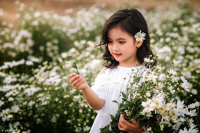 Giữa lòng Hà Nội cúc họa mi bung nở đón đông về đẹp đến nao lòng