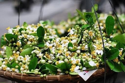Hoa bưởi tháng 3 - đẹp da, tốt cho sức khỏe