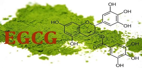 Thành phần EGCG Catechin trong bột matcha