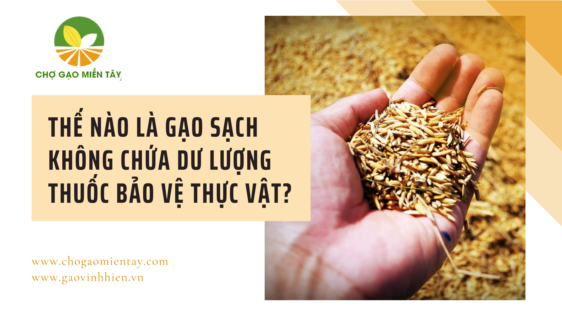 Gạo không chứa dư lượng thuốc trừ sâu