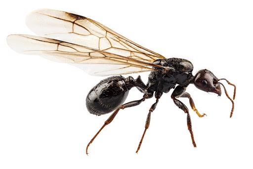 côn trùng chui vào tai