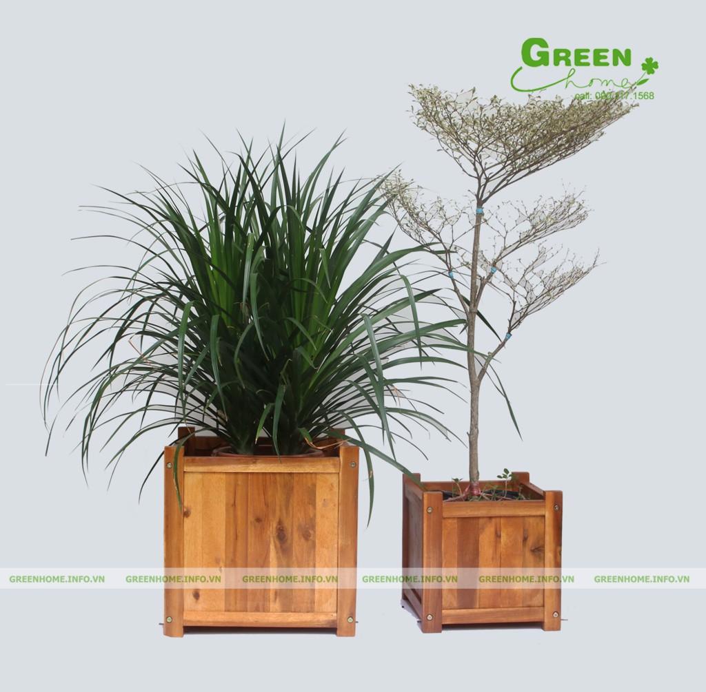 Chậu gỗ vuông trồng cây