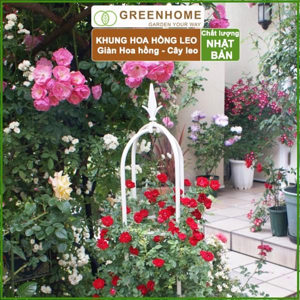 Khung hoa Hồng leo Lồng chim R30xC160cm - Gìàn hoa hồng, các loại cây hoa leo - Daim Nhật Bản