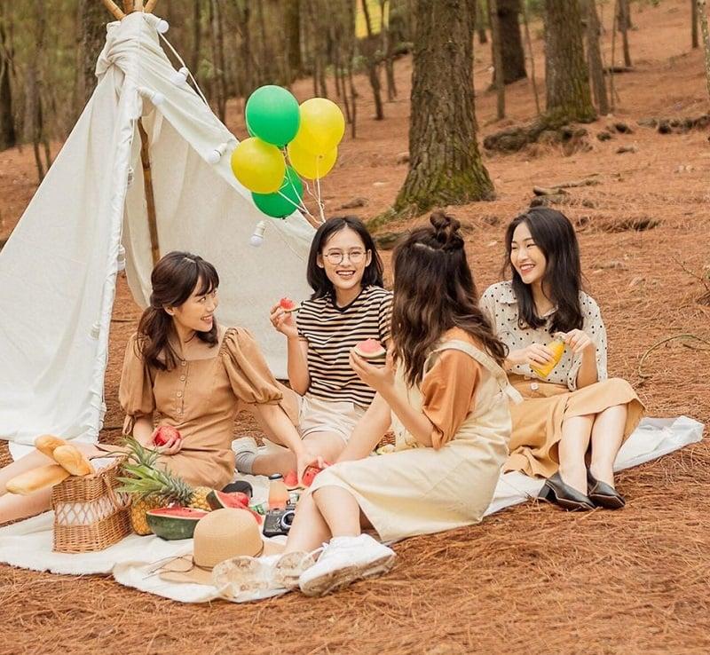 Dựng lều trại ở khu rừng thông