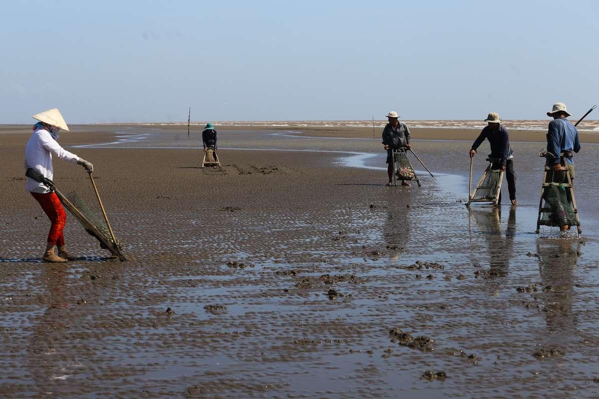Ngư dân đang cào nghêu trên bãi biển Bình Đại Bến Tre